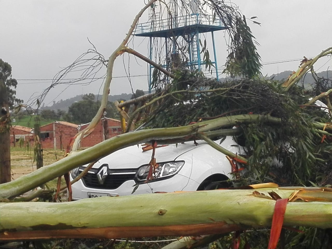 Por fuerte aguacero, árbol cae sobre vehículo en La Unión