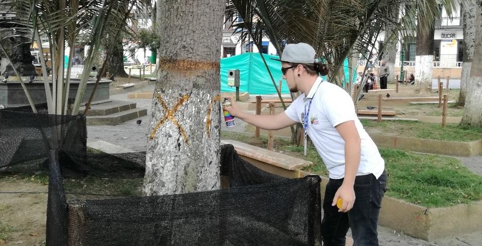 Cerca de 20 árboles del Parque Principal serán intervenidos