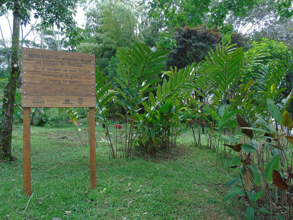 En San Luis se recupera con Bosque de Paz, espacios antes afectados por la violencia