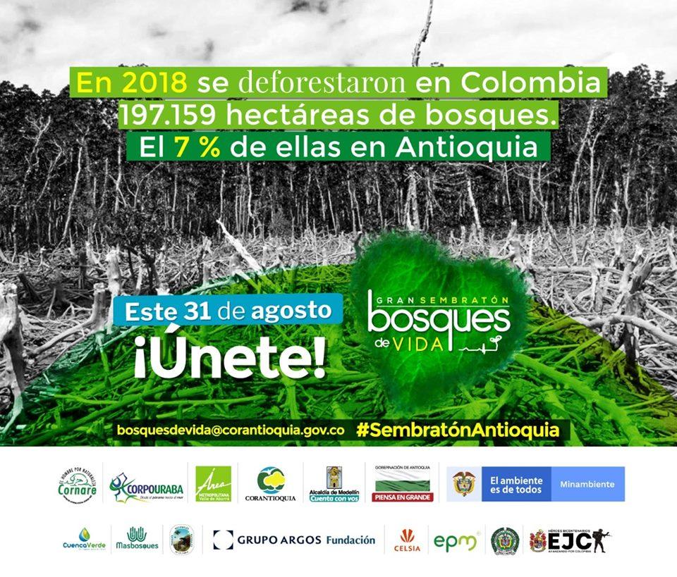 Se realizará siembra de árboles en Antioquia y usted puede participar.