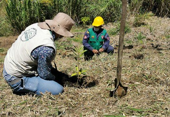Proyecto de reforestación de Cornare ha logrado sembrar más de 500 mil árboles en la región