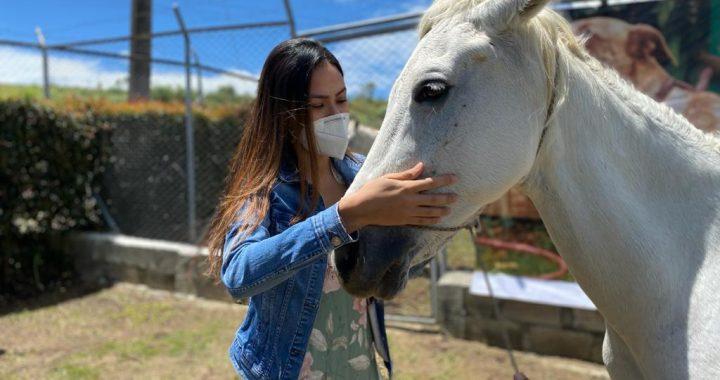 Paloma, una yegua maltratada en Marinilla, hoy fue entregada a un nuevo hogar