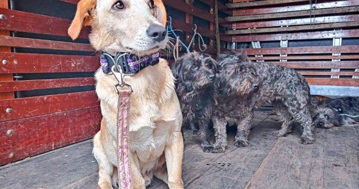 En Rionegro adelantaron operativo de rescate de seis perros que estaban en condición de abandono