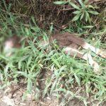 Conmoción en La Ceja tras hallazgo de dos cabras decapitadas en aparente ritual