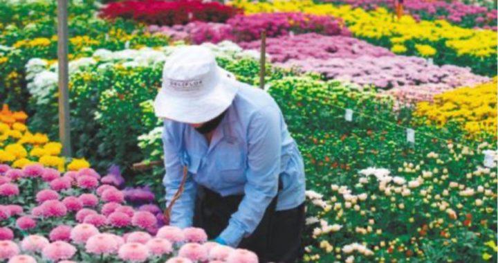 Comenzaron las exportaciones de flores desde el Oriente Antioqueño para la celebración del día de San Valentín