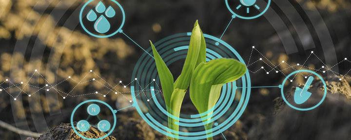 Abejorral tendrá la primera Secretaría de Agricultura con inteligencia artificial de Antioquia
