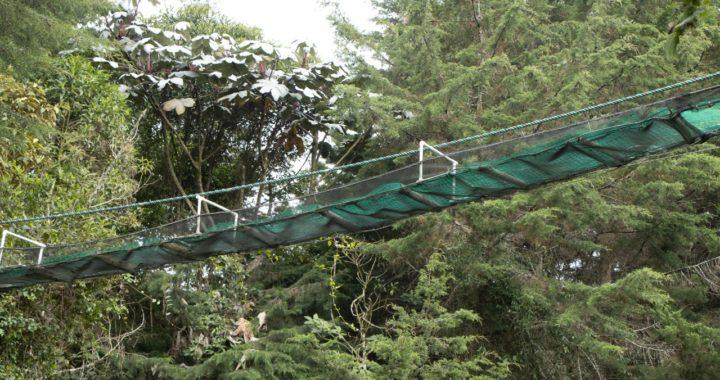 ¡Los animales necesitan cruzar! Entre La Ceja y La Unión instalaron puente elevado para tránsito de fauna