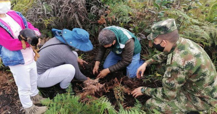 ¡Respira el campo! 6.500 árboles fueron sembrados en Guarne