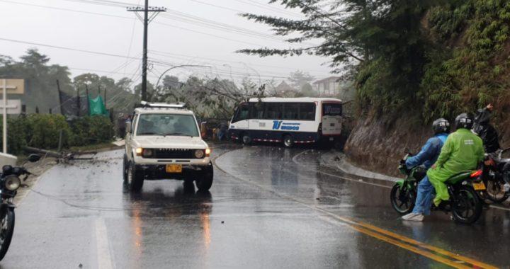 Un árbol cayó encima de un microbús de Transunidos en la vía La Ceja- Medellín cerca al sector Don Diego