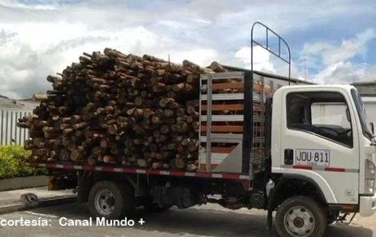 Policía ambiental de La Ceja decomisó  madera exótica que era transportada ilegalmente en un vehículo por zona rural.