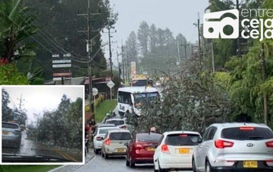 Paso restringido en la vía hacia Rionegro, tras la caída de un árbol.