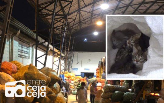 Animalistas denuncian maltrato en la Plaza de Mercado de El Santuario.