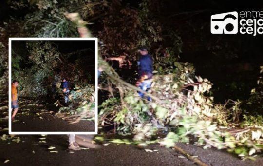 Atención: Encapuchados derribaron árboles y bloquearon la vía en Cocorná