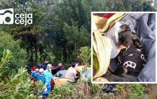 ¡Un milagro! Perrito se salvo de morir en el accidente en que fallecieron sus amos.