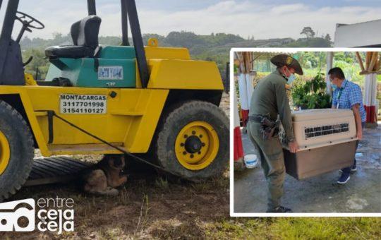 ¡Indignante! Un perro permanecía amarrado a una máquina en Marinilla.