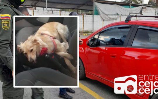 ¡Irresponsables! Mascota fue dejada al interior de un vehículo, sin agua y con los vidrios arriba.