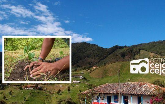 La meta en El Carmen, es sembrar 25.000 árboles durante el 2021.