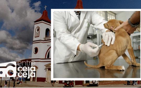 La Unión: habrá jornada de vacunación antirrábica para mascotas.