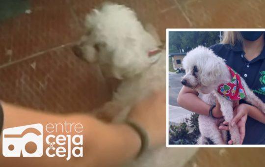 Salvaron a perrito ciego y en estado geriátrico de ser arrollado por un camión.