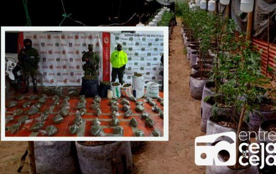 Sonsón: al «Clan de Oriente» le decomisaron plantas y marihuana procesada.