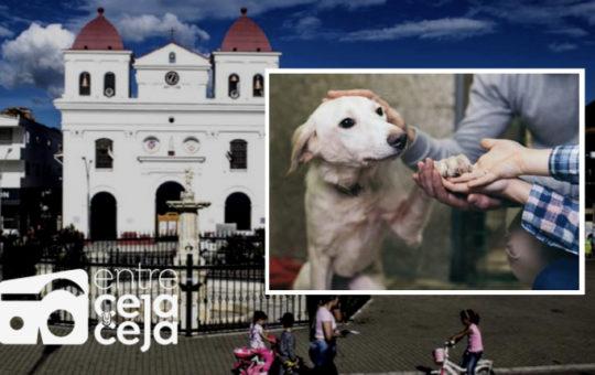 """El Santuario: este sábado habrá una gran """"adoptatón"""" de mascotas en el parque principal."""