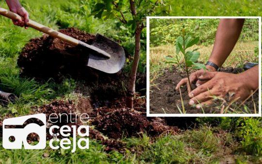 En Colombia se sembraron más de 7 millones de árboles en la Sembratón Nacional